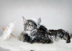 Kot, Kapelusz, Parasol