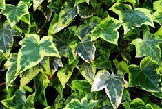 Rośliny – bomby tlenowe, które powinniśmy mieć w swoim domu | treborok Plant Leaves, Vegetables, Plants, Vegetable Recipes, Plant, Veggies, Planets