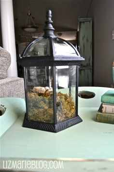 Terrarium made from a non-working light fixture. Great idea!