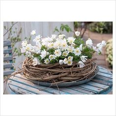 GAP Photos - Garden & Plant Picture Library - Anemone blanda 'White Splendour' in wreath of vine clematis on garden table - GAP Photos - Specialising in horticultural photography