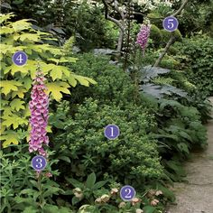 Gorgeous garden plant combinations for shade or sun. Breaking the Rules: Plant Identification - FineGardening
