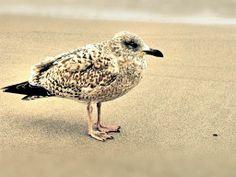 Moewe  #moewe #ostsee #beach #darß #doppellotte