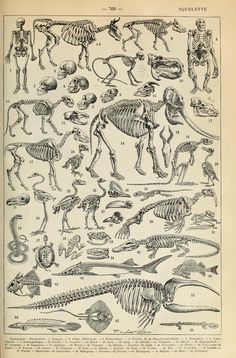 Image result for De vocis auditusquae organis historia anatomica