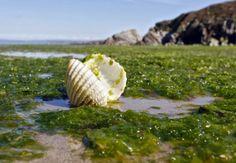 Le FabShop lanza un nuevo material de impresión 3D: algas marinas http://www.print3dworld.es/2013/11/le-fabshop-lanza-un-nuevo-material-de-impresion-3d-algas-marinas.html