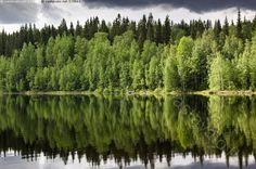 Vihreä rantamaisema - vesi järvi Koitere kesä ilta heijastua heijastus pilvi tyyni ranta peilikuva metsä pilvet vihreä järvimaisema rantamaisema koivikko lehtipuut kuuset metsä Kivilahti