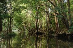 Promised Land (1 of 3) - Never Never Creek NSW Australia   by ozipital, via Flickr