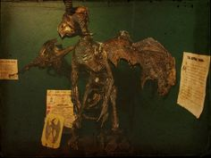 Jersey Devil, The Haunted Cottage's Exhibition of the Supernatural and Paranormal, Harpers Ferry, West Viriginia, USA
