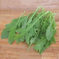 Sylvetta Wild Arugula Organic