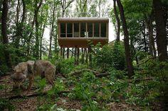 sleep & enjoy - das etwas andere Hotelmagazin | Dörverden: Wolfcenter-Baumhaushotel 'Tree Inn'