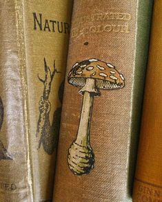 Fungi and How to Know Them . (Illustrated by M. Spittal) 1909 Old books with botanical illustrations Harry Potter Aesthetic, Book Aesthetic, Witch Aesthetic, Aesthetic Drawing, Goblin, Vie Simple, Watercolor Flower, Neville Longbottom, Mellow Yellow