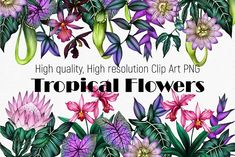 Tropical flowers - high quality clip by ARTVracovska on @creativemarket