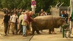 В результате наводнения из зоопарка Тбилиси сбежали дикие животные http://lifenews.ru/news/155601