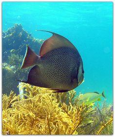 Vida marina. Varadero, Cuba, Pets, Animals, North Shore, Marine Life, Scenery, Animales, Animaux