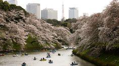 - Japoneses desfrutam de um passeio de barco num parque de Tóquio, no Japão. Foto: Kimimasa Mayama / EFE