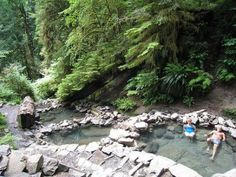 Terwilliger (Cougar) Hot Springs near Eugene, Oregon; pools surrounded by old growth forest.