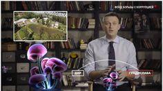 Навальный и фиолетовые грибы #фиолетовыегрибы