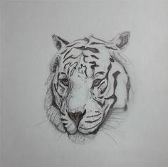 Tiger face sketch black and grey