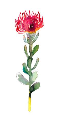 """""""Untitled (Pin Cushion)"""" is a fine art limited edition print on beautiful textured paper by Natalie Martin. Art And Illustration, Botanical Illustration, Watercolor Flowers, Watercolor Paintings, Art Paintings, Watercolours, Drawing Flowers, Flower Drawings, Plant Drawing"""