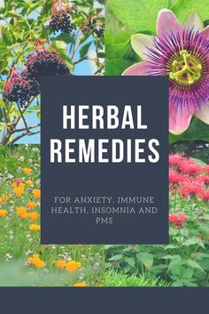 Herbal remedies have been used for decades in the treatment of everyday problems that plague all of us from time to time. Here we will discuss seven herbs, available from Trees-Plants Nursery, that can be used to treat everything from anxiety to insomnia in a natural way that avoids dangerous and bothersome side effects.
