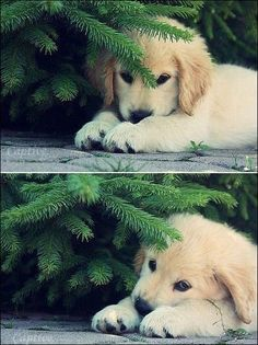 Puppy under the tree!!!!!!