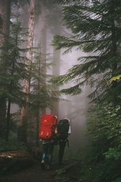 Go camping. Go camping. Bushcraft, Adventure Awaits, Adventure Travel, Forest Adventure, Voyage Week End, Trekking, Into The Wild, To Infinity And Beyond, Adventure Is Out There