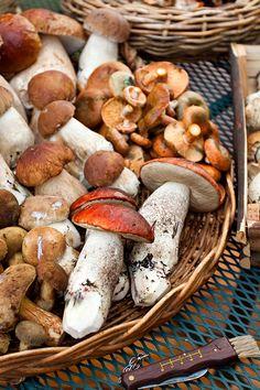 Newly foraged mushroom medley!
