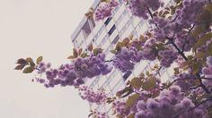Primavera de Londres - Shepherd's Bush