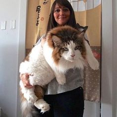So big and fluffy 😍😍😍 Tag a friend❤️ . . #AwhAnimals #cat #cats #catsofinstagram #catsofworld #lfl #pet #pets #petsofinstagram #petstagram #lfls #catsofig #catsofinsta #catoftheday #eyes #cute #adorable #cutecat #cutecats #catstagram #kitten #kitty #cat_features #cat_of_instagram #cats_of_instagram #cats_presidency #meow #kittenlove #kittensofinstagram #kittenplay