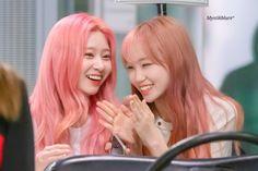 Forever Girl, My Forever, Japanese Girl Group, Pink Hair, Twitter, Memes, Korean Girl, Kpop Girls, Yuri