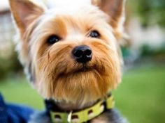 Why Socialize Your Puppy A Guide to Why and How