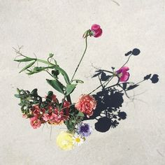 silver lake farms flowers / paper & type on instagram.