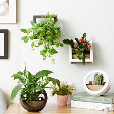 Great alternative and lightweight optionMake your beautiful vertical garden in the easy way by this potSoil can be fully bloom, the surface is not easy to dry, to promote root growthFlower pots with a leaking sieve, permeable, breathable good, to prevent root rot