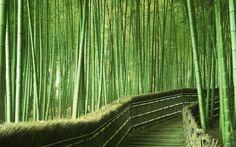 Sagano Bamboo forest - Kyoto