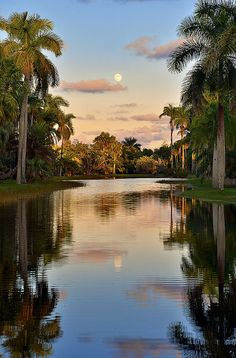 The Hunter's Moon, Bailey Palm Glade, Fairchild Tropical Botanic Garden, Miami, Florida. Fairchild Tropical Botanic Garden is a 83-acre botanic garden, with extensive collections of rare tropical plants including palms, cycads, flowering trees and vines.