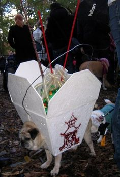 Dog in Chinese Take-out costume
