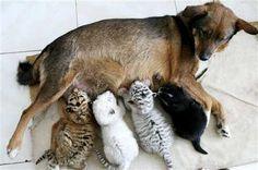 Madre adoptiva. #dog #felines