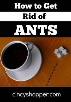 How to Get Rid of Ants. Needing to get rid of pesky ants? If so check out these ways to get rid of them