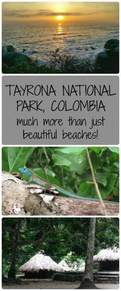 Parque Nacional Tayrona, or Tayrona National Park in English, is a beautiful natural reserve on the north coast of Colombia.  Caribbean beaches, lush forest, nature and indigenous communities mean there are a lot of things to do in Tayrona!
