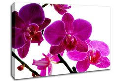 Pink Orchid Flowers Canvas Stretched Canvas