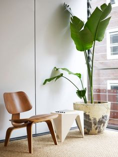 The design chaser: arent & pyke plants дом, цветы, интерьер Mid Century Modern Chair, Decor, Home Office Chairs, Chair, Interior, Tropical House Plants, Classic Chair Design, Indoor Chairs, Lounge Chair Design