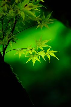 I Like It Wild And Green...Always In The Country !... http://samissomarspace.wordpress.com