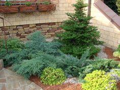 Хотите любоваться своим садом круглый год? Посадите хвойные растения, и...