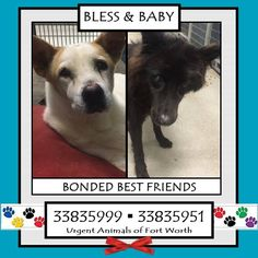 BLESS & BABY located in Fort Worth, TX, to be destroyed 12/17/2016