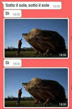 Funny Test, Wtf Funny, Funny Cute, Funny Video Memes, Funny Relatable Memes, Animal Memes, Funny Animals, Italian Memes, Funny Sports Pictures