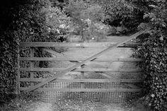 Entry by Craig Birmingham