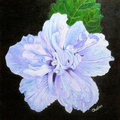 Carla Austen Double Rose Of Sharon Hibiscus Coloured Pencil 6 X This Is From A Project I Did Cynthia Knoxs Wonderful Course Vivid Flowers In