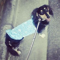 My smile dog.