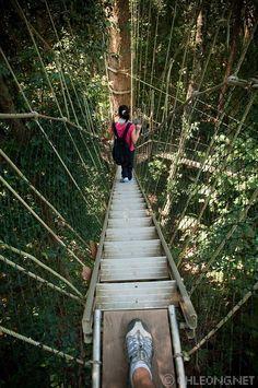 Taman Negara canopy walkway in the Titiwangsa Mountains, Malaysia