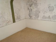 Mould Remediation -  After