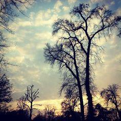 #Winter #silhouettes. #Milano #sky #nature #landscape (presso Giardini Pubblici Indro Montanelli)